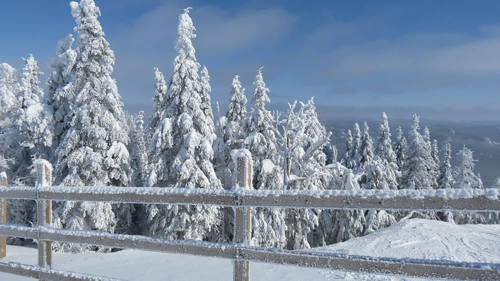 Mountains in Mont-Tremblant with Snowy Trees